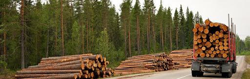 Як вигідно купити технічну деревину на Прозорро